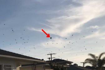Очевидцы запечатлели напуганных птиц, которые с криками окружили НЛО