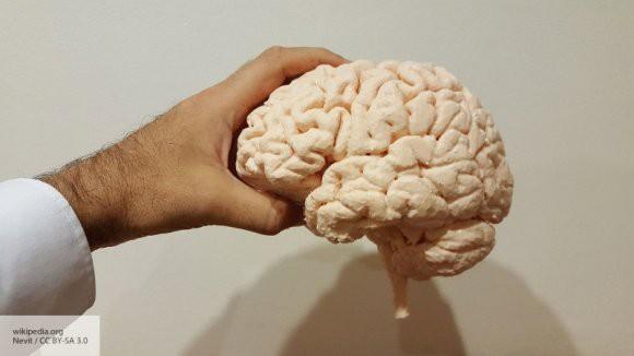 Американские ученые планируют передавать потоки информации напрямую в мозг