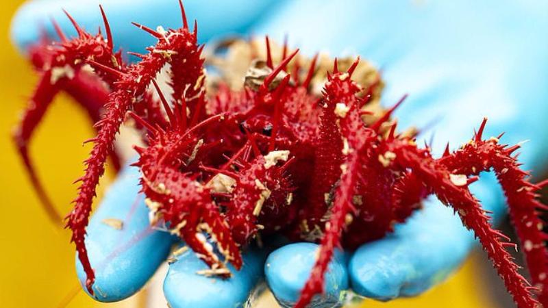 У берегов Австралии нашли сотни неизвестных науке существ