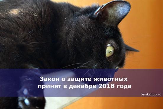 Закон о защите животных принят в декабре 2018 года