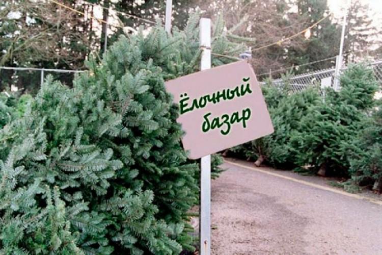 Елочные базары в Москве 2018-2019 - адреса и цены, где купить елку