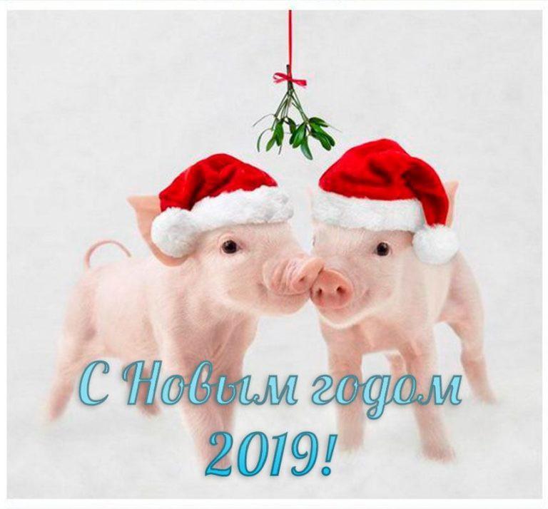 Поздравления с Новым годом 2019: поздравления со свинками, лучшие пожелание в стихах