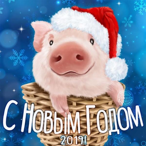 Новый год 2019: поздравления в прозе, и стихах, красивые открытки с годом Свиньи