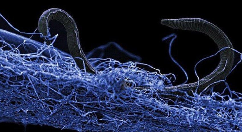 Под землёй нашли 20 миллиардов тонн живых существ
