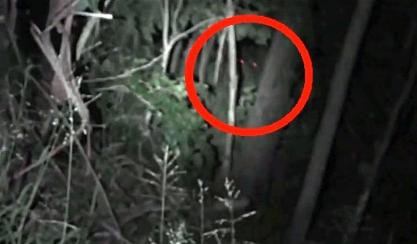В австралийских лесах засняли крупное существо с красными глазами