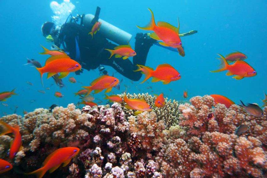 У восточного побережья США обнаружен огромный коралловый риф