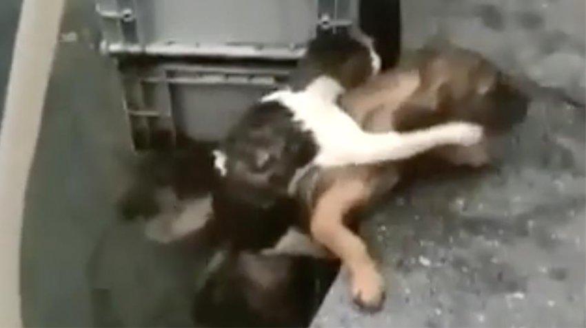 Видео дня: пес спас тонущего кота
