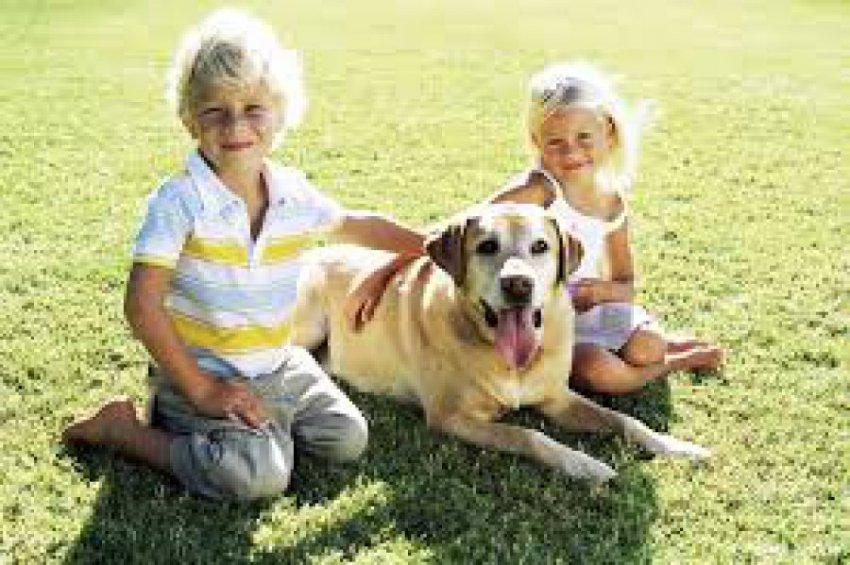 Ученые рассказали, от каких заболеваний защищают детей кошки и собаки