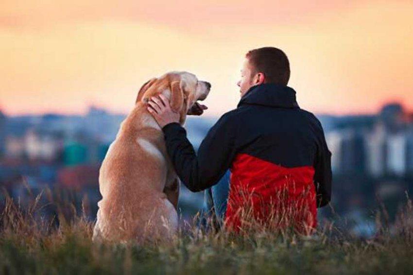 Исследование: Собаки на самом деле чувствуют плохих людей