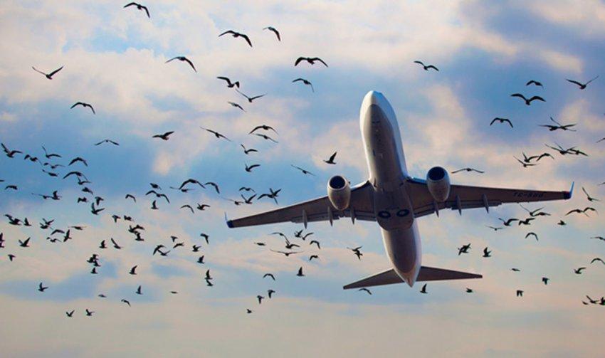 Стая птиц атаковала взлетавший самолет