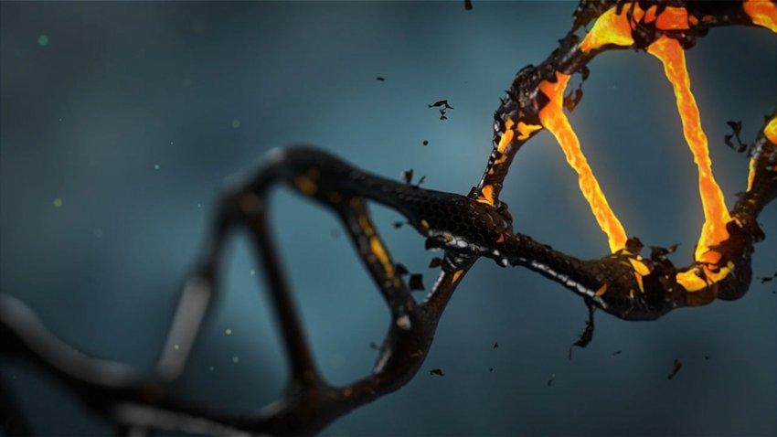 Генетики разработали лекарство от всех заболеваний