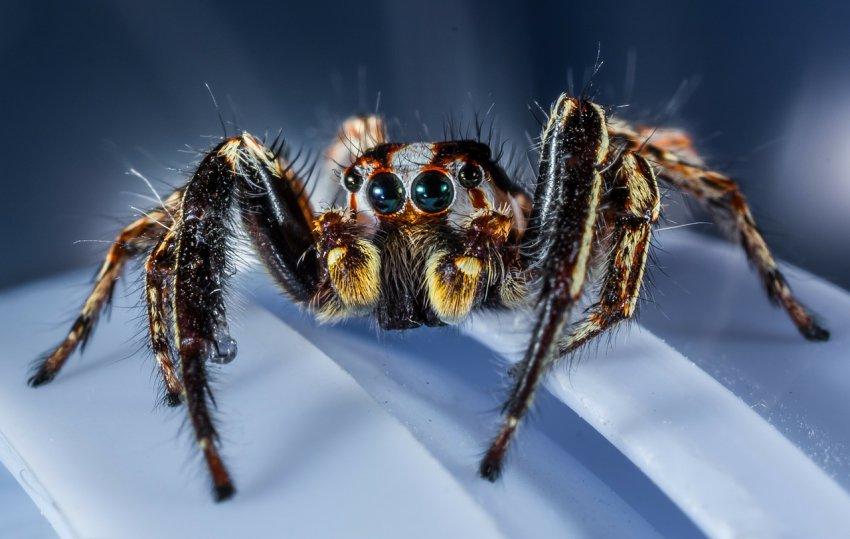 Странные детские воспоминания об огромном пауке и похищении