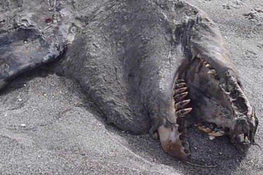ТОП-5 морских чудовищ 2018 года напугавших даже самых смелых
