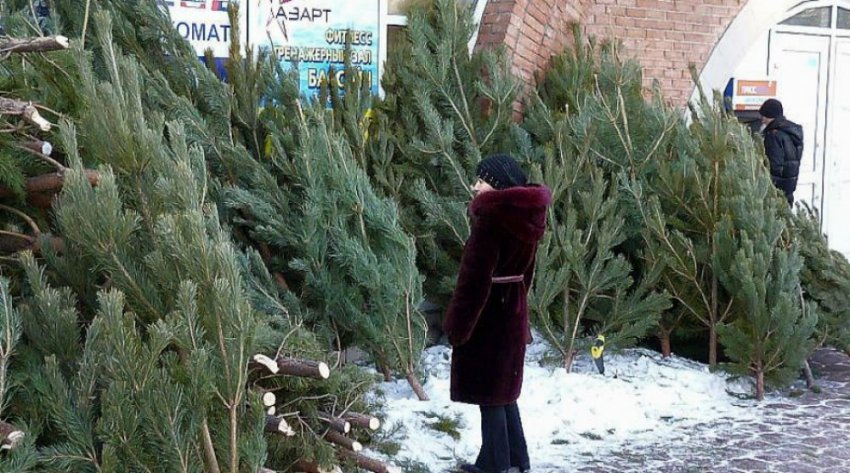 Елочные базары в Екатеринбурге 2018 - адреса и цены, где купить елку
