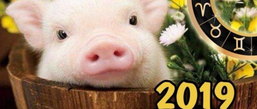 Новый 2019 год какого животного по гороскопу, какой цвет, в чем встречать