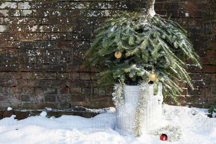 Предложено применение для иголок новогодних елок
