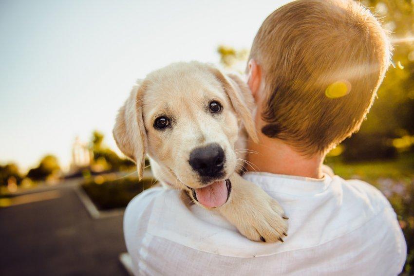Ученые обнаружили у людей ген сострадания к животным