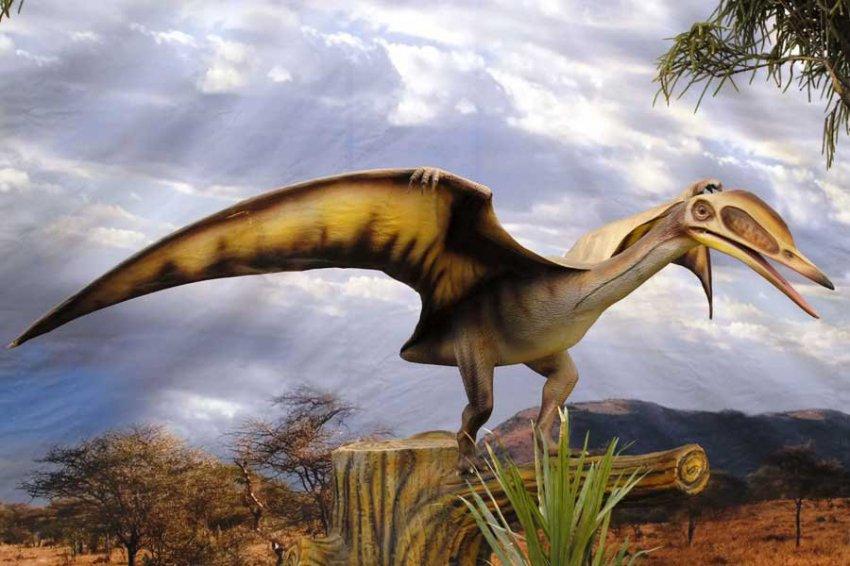 В Англии обнаружен новый птерозавр юрского периода