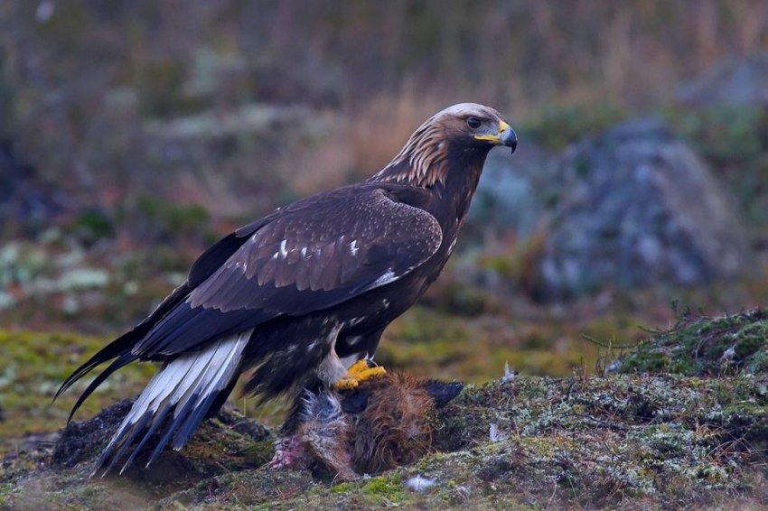 2019 будет год парящего орла по славянскому календарю. Славянский тотемный гороскоп. Чего ждать?