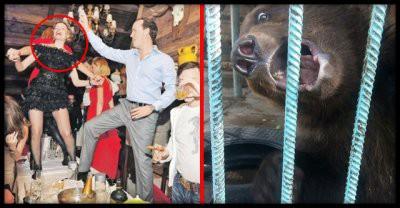 В Ачинске на новогоднем корпоративе медведь откусил женщине руку
