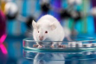 Учеными установлена связь между ожирением, старением и тревожностью