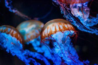 В Австралии более 20 человек пострадали от ожогов ядовитых медуз