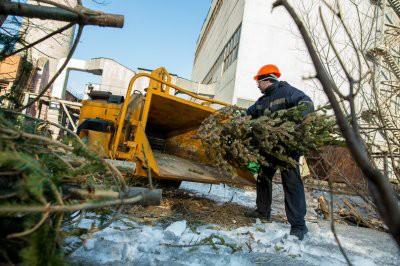 В Москве откроются пункты по приему елок