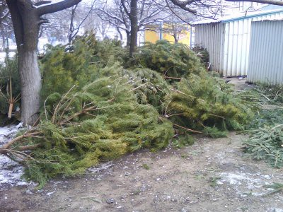 Когда нужно убирать елку по православному календарю 2019 – до или после Крещения?