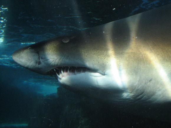 У побережья Австралии акула напала на двух женщин