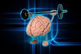 Учеными обнаружена связь между размером живота и мозга