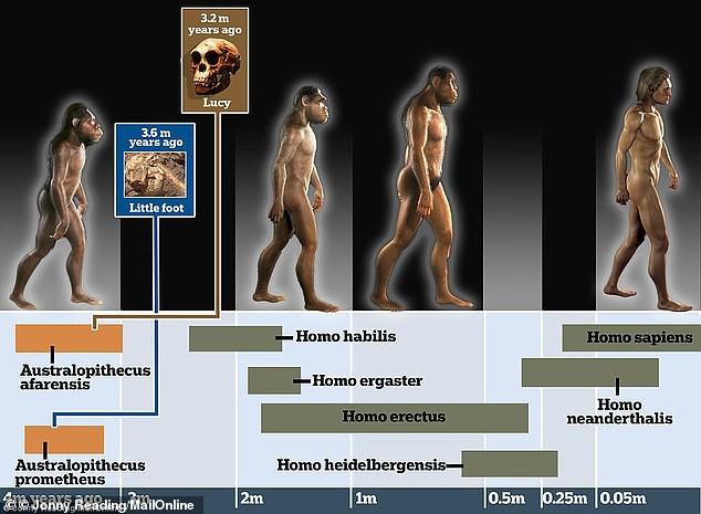 Литтлфут - новый возможный предок человека, передвигался в точности как шимпанзе