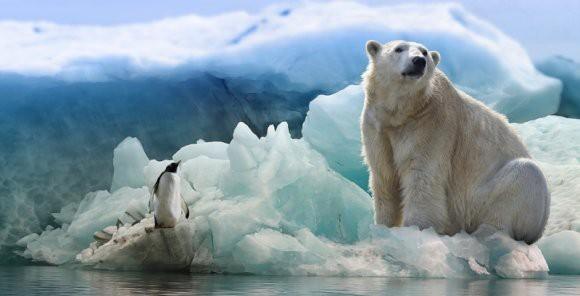 Белый медведь прыгнул на российскую атомную подводную лодку: британские СМИ рассказали про инцидент в Арктике