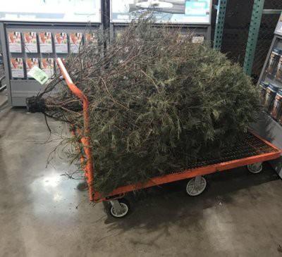 С 15 января уже можно убирать елку