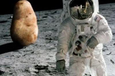 На Луне проросли семена хлопка, высаженные китайским зондом