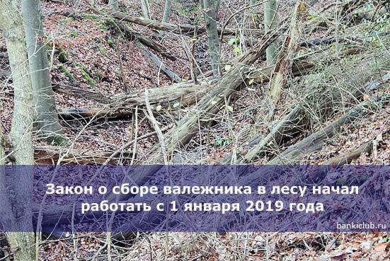 Закон о сборе валежника в лесу начал работать с 1 января 2019 года