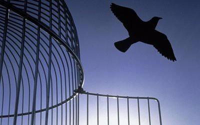 Будет ли уголовная амнистия в России в 2019 году