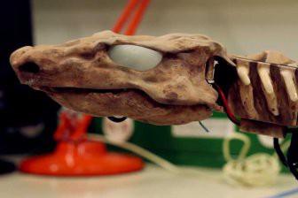 Учёные оживили скелет существа, жившего 290 млн лет назад