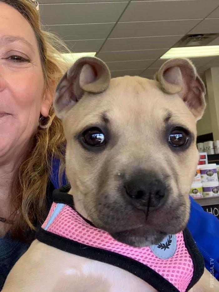 Спасли щенка с самыми необычными ушами