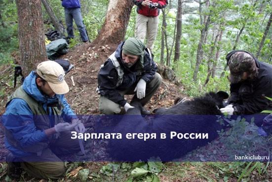 Зарплата егеря в России