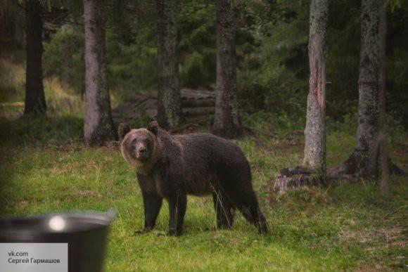 Чиновник может получить срок за убийство спящего медведя