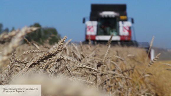 В январе Сирия закупила 200 000 тонн российской пшеницы