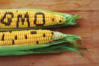 Фрагменты ДНК из ГМО-продуктов остаются в клетках человека