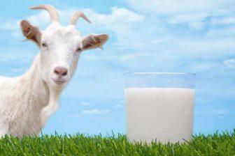 Почему стоит отказаться от коровьего молока и перейти на козье?