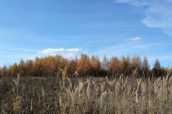 Заброшенные пашни зарастают лесом в 5 раз быстрее, чем считали экологи