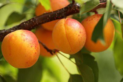 Назван лучший фрукт для похудения