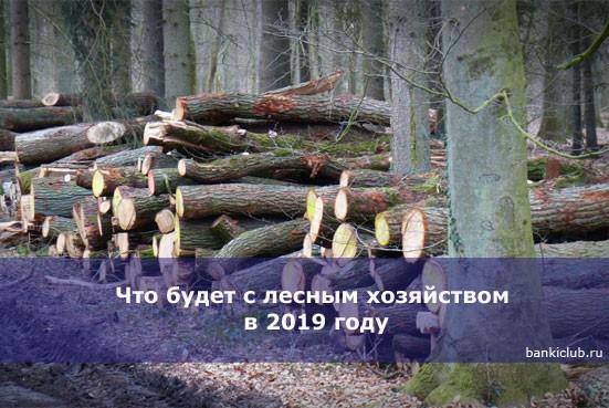Что будет с лесным хозяйством в 2019 году