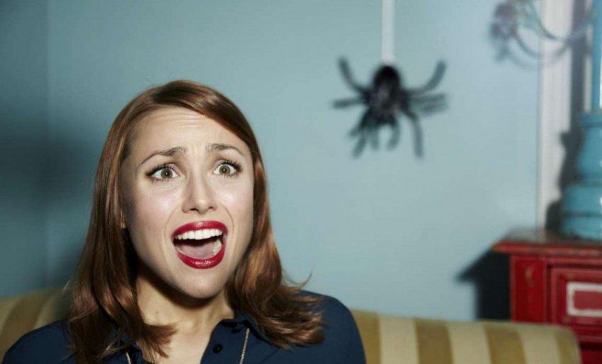 Австралиец так громко кричал на паука, что привлек внимание полиции
