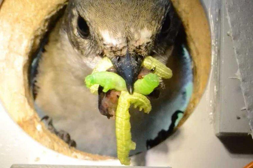 Глобальное потепление делает птиц жестокими убийцами