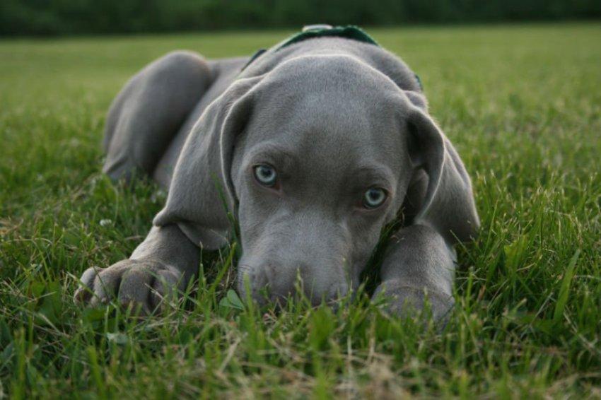 Учёные через ДНК проанализировали собачью психологию