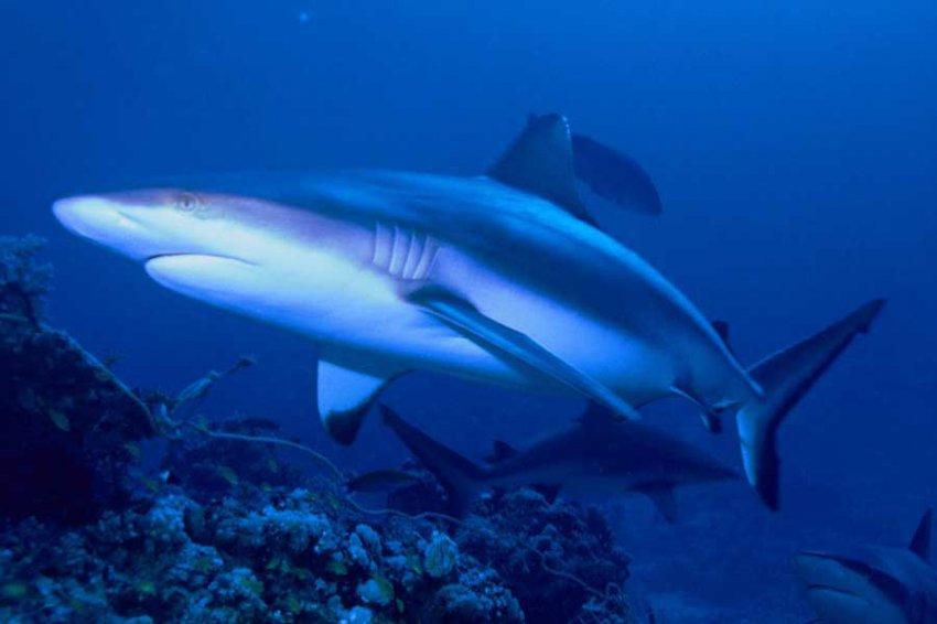 Ученые обнаружили в музее вымерший вид акул